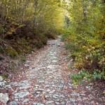 Montemaggio sentiero