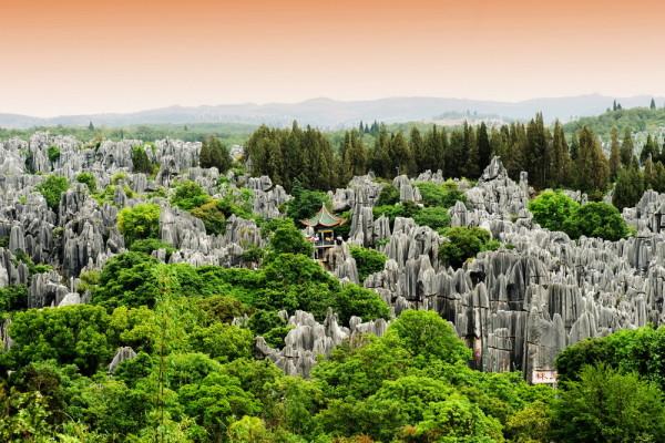 Foresta-p.-Yunnan