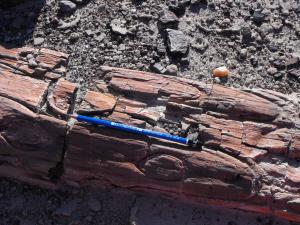 Parteicolare tronco fossile