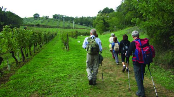 Trekking in Valdelsa