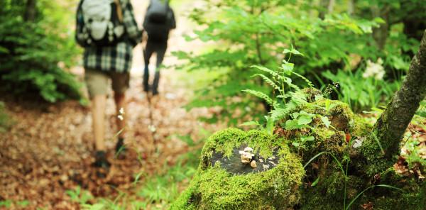 A piedi nel bosco